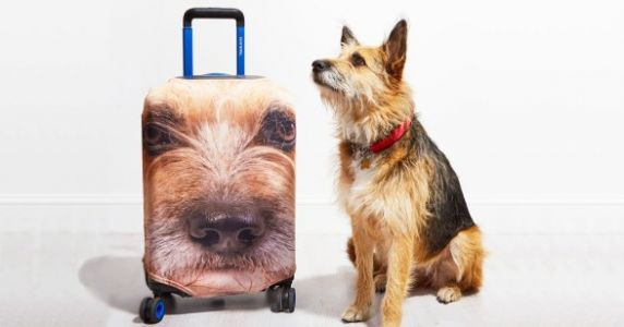 You Can Plaster Your Pet's Face On Your Luggage Now