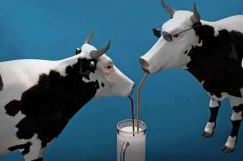 Milk being dumped while shortages of other food and grocery items abound