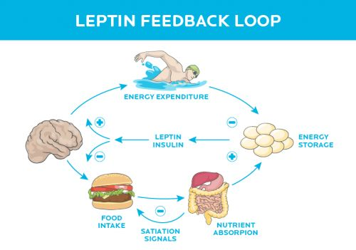 Eating too much? You can blame your brain. (How brain signaling drives what you eat. And what to do about it.)