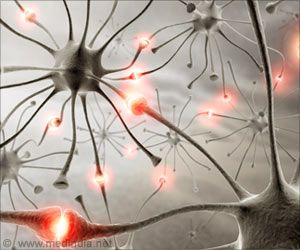Social Behaviors Could Be Influenced By Cerebellum Activity: Study