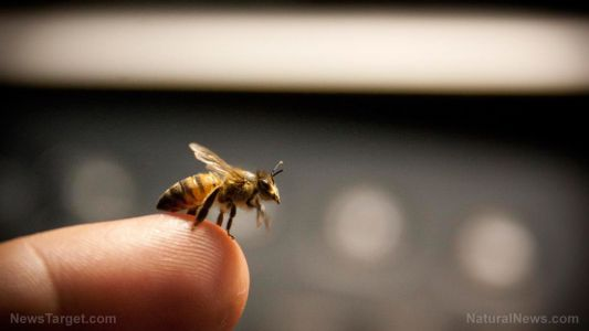 Compound in honey bee venom found to destroy cancer cells within 60 minutes