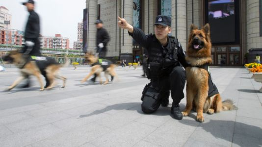 Dogs Are Being Trained To Stop School Shooters
