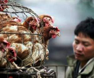 Bird Flu Cases Reported in 13 Indian States So Far