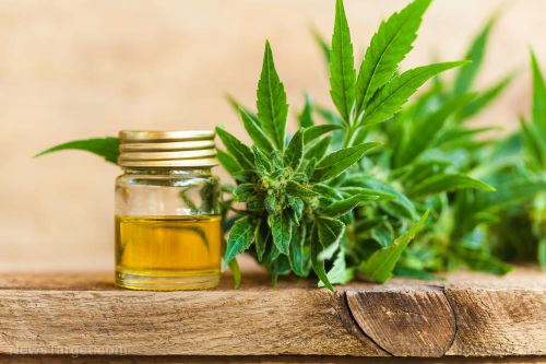 Should you rely on cannabidiol oil for pain relief when SHTF?
