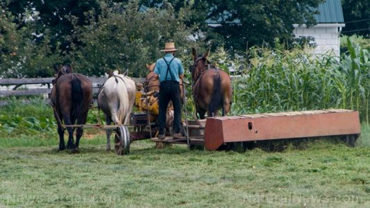 Old-order Amish found to have a gene mutation that protects against aging