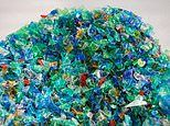 How plastic is polluting your body: Just how worried should we be?