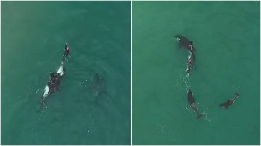 Orca Whales Casually Joined A Swimmer And The Video Is Literally Breathtaking