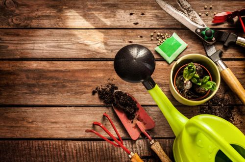 Home gardening basics: Harvesting and storing seeds from garden plants