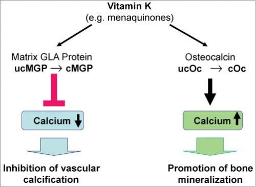 Are You Getting Enough Vitamin K?