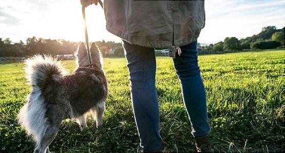 Your Dog May Be Leading You to a Healthier Heart