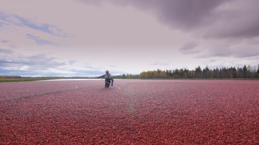 AOAC approves methods to ID, quantify cranberry constituents