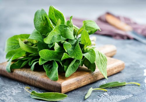 Sage advice: Study reveals sage extract helps with hot flashes during menopause