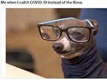 Funny memes can help people cope with stress of Covid pandemic, study claims
