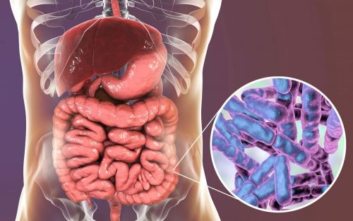 6 Ways to Improve Your Gut Microbiome