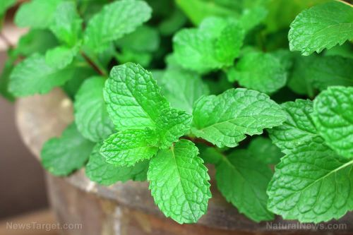 Relieve tension headaches and ease digestive issues with a soothing cup of peppermint tea