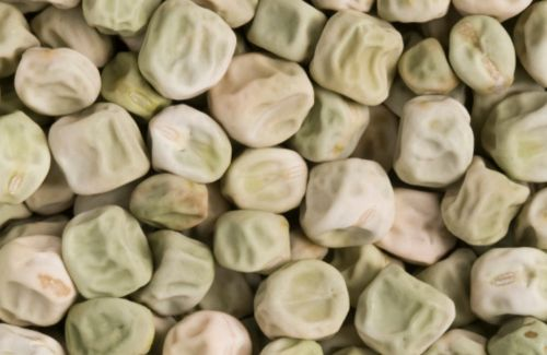 Effect of 'super pea' on gut may benefit those at risk of diabetes, study claims