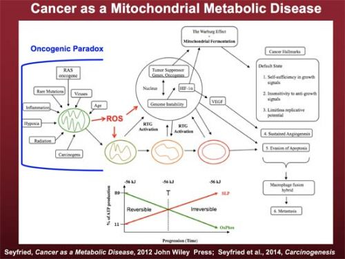 Why Cancer Needs To Be Treated as a Metabolic Disease