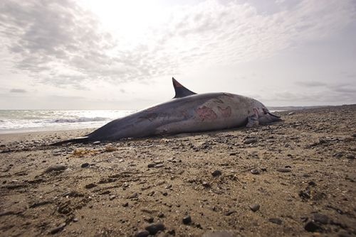 Gruesome photos of dead dolphin highlights the unresolved plastic problem along Britain's coastline