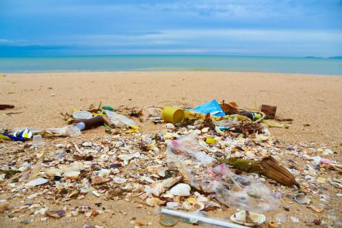 Scientists have found ANOTHER major problem with the plastic pollution in the oceans: It harbors bacteria that can be transferred up the food chain