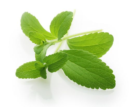 Preclinical study finds stevia is comparable to antibiotics in the treatment of Lyme disease