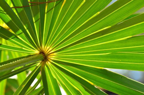 BAPP publishes Saw Palmetto Berry extract lab guidance document