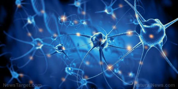 """Does our brain have an internal hunger switch? Researchers identify neurons that could """"turn off"""" appetite"""