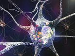 Hope for Parkinson's patients as scientists discover how to destroy toxic clumps in their brains