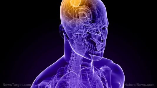 Applying pressure to the arms and legs shown to improve brain blood flow, reveals study