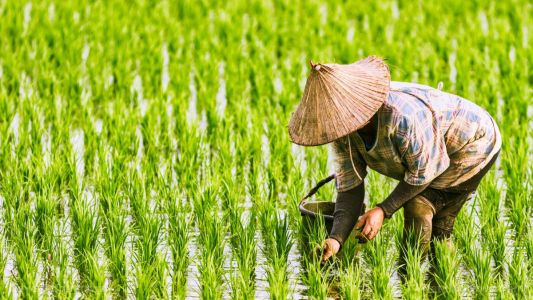 Researchers take a closer look at the migration of heavy metals from soil to rice in China