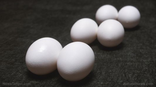 "Researchers are ""storing"" energy using eggshells with new conductive material"