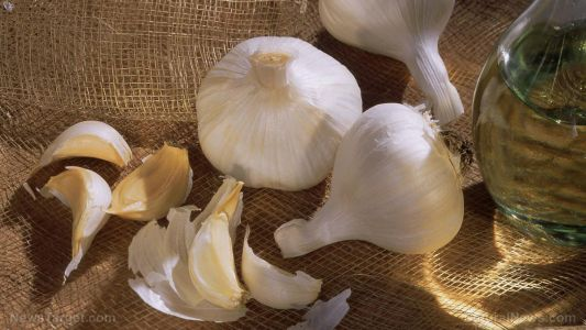 Garlic can protect against heart tissue damage caused by reoxygenation