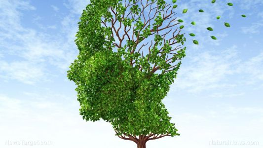 B is for brain: Nicotinamide riboside is crucial in preventing Alzheimer's