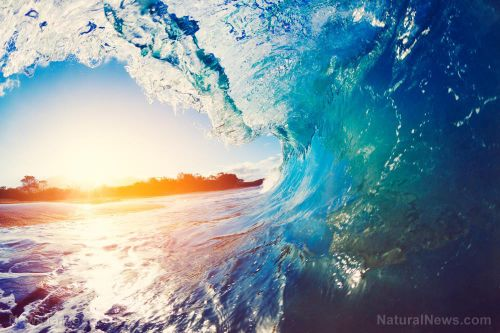 Study: Plastic pollution is harming photosynthetic bacteria in the ocean that produce 10 percent of the oxygen we breathe