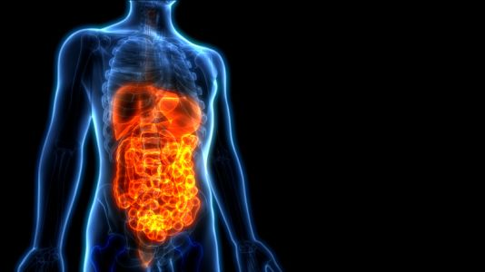 Scientists identify hormone that might help solve malabsorption