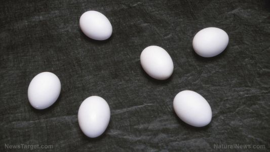 Eating eggs and other sources of dietary cholesterol NOT linked to risk of stroke, according to study